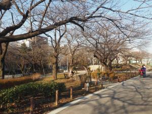 Sumida Park - 1